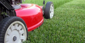 Grass Cutter Lawn Mower